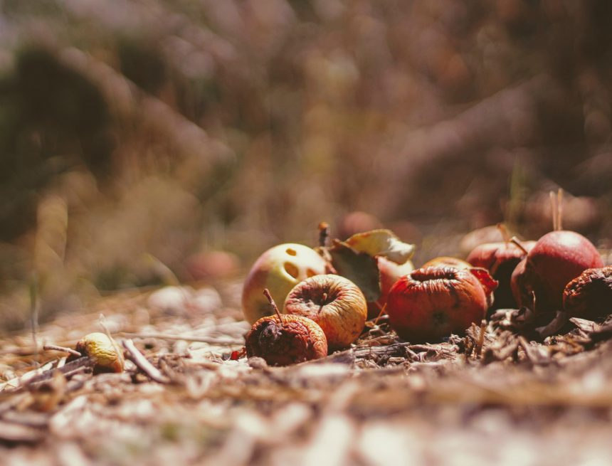How Food Waste Is Helping The World To Make Energy